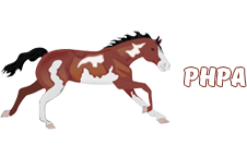 Pinto Horse and Pony Association